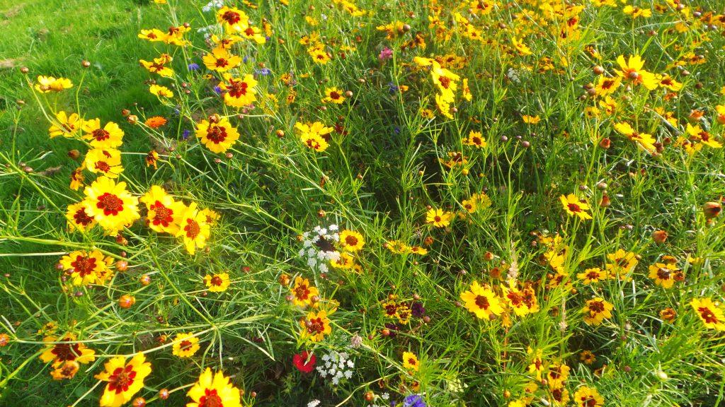 Wild flowers by the roadside, Ben Rhydding, Ilkley - September 2016